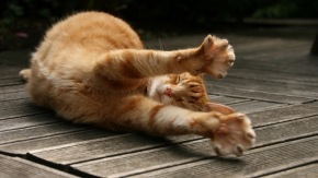 sleepy-stretching-cat-1080