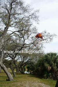 kite flying (1)